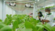 Permalink ke PLN Dukung Program Container Farming Pertama di Ibu Kota, Percepat Masa Tanam Hidroponik