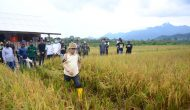 Permalink ke Hadapi Krisis Pangan, RI Tambah 1,8 Juta Ha Lahan Pertanian